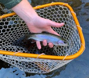 Smoky Mountain Fly Fishing Guide